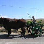"""festa del grano """"s'arzola""""-giogo di buoi- luglio 2007"""