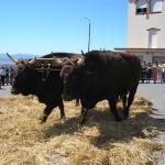 """la festa del grano  """"s'arzola""""–luglio 2007"""