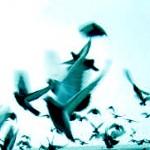 pieve-di-cento_lancio-colombi